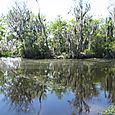 Swamp 4054