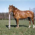 048  Hvad hedder hesten, Paul