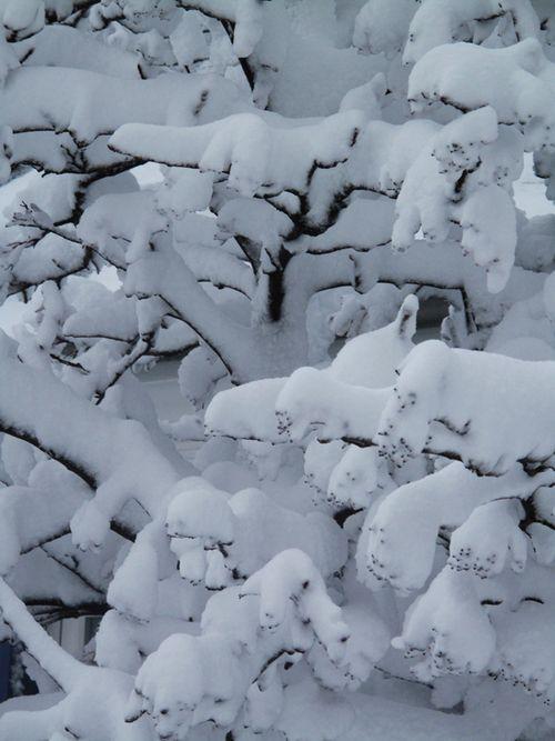Sne i Svaneke_0564