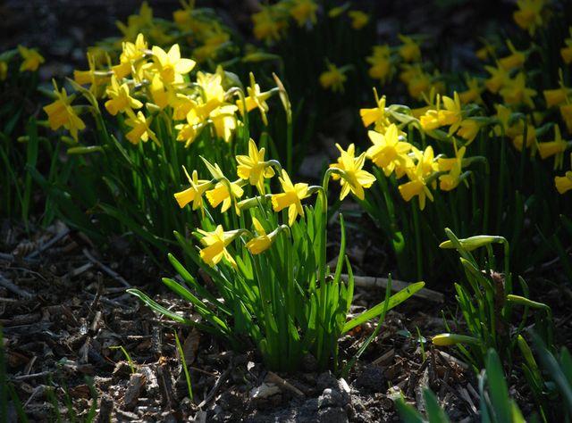 Haven april_9695