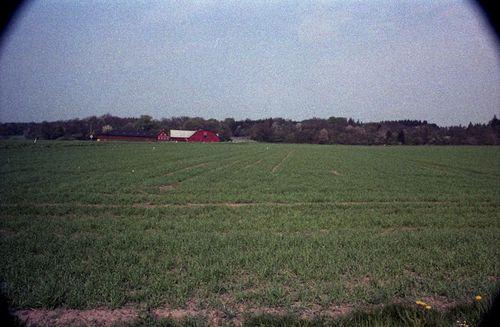 314 Skovgård i Bodilsker