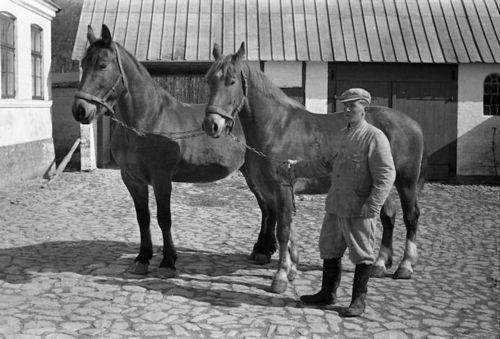 409 Paul med to af hestene